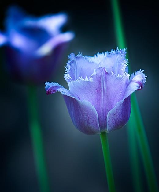 ~Floriiii~ Flowers_16