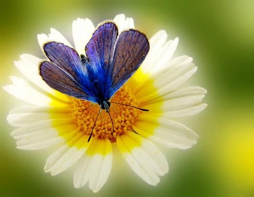 ~Floriiii~ Flowers_17
