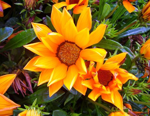 ~Floriiii~ Flowers_2