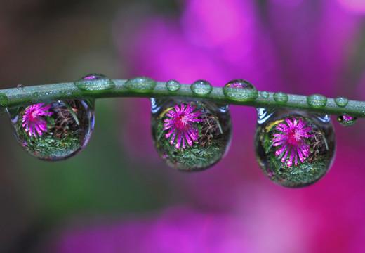~Floriiii~ Flowers_22