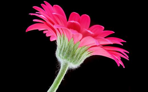 ~Floriiii~ Flowers_26