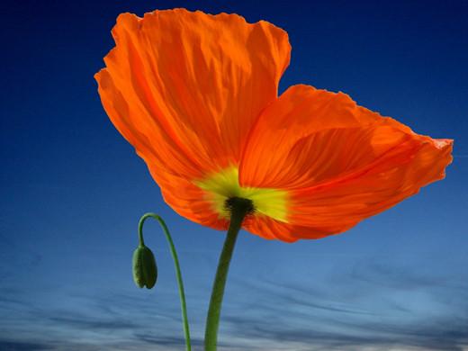 ~Floriiii~ Flowers_28