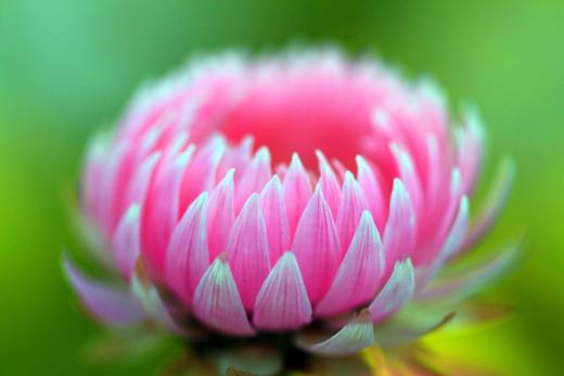 ~Floriiii~ Flowers_30