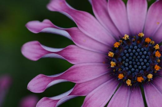 ~Floriiii~ Flowers_31