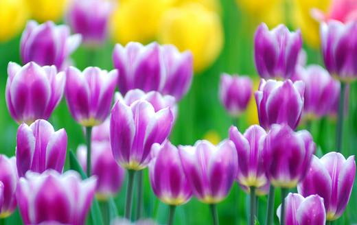 ~Floriiii~ Flowers_32