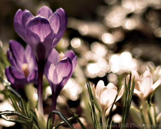 ~Floriiii~ Flowers_33