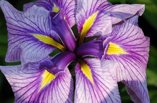 ~Floriiii~ Flowers_34