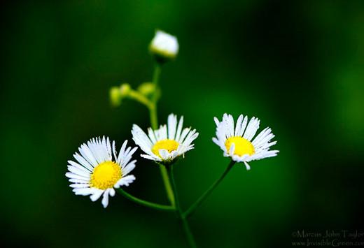 ~Floriiii~ Flowers_38