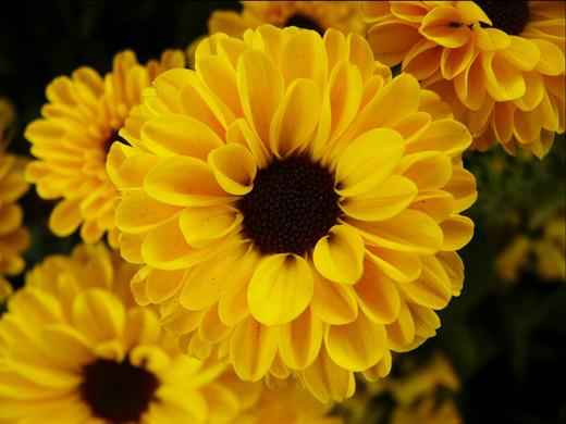 ~Floriiii~ - Page 2 Flowers_41