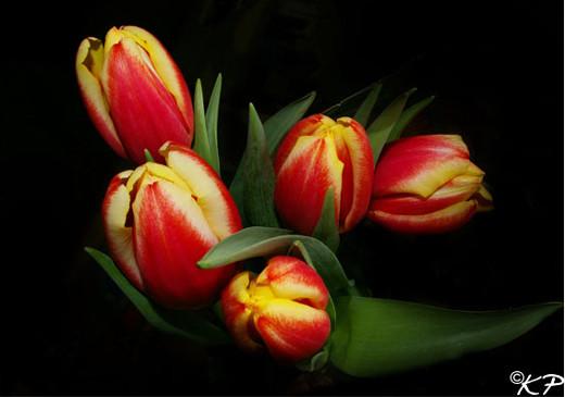~Floriiii~ - Page 2 Flowers_42