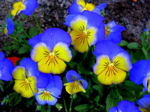 ~Floriiii~ - Page 2 Flowers_43