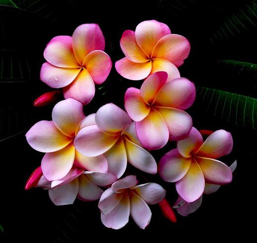 ~Floriiii~ - Page 2 Flowers_44