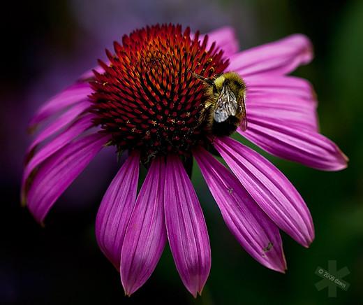~Floriiii~ Flowers_5