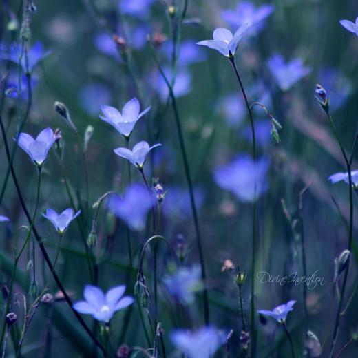 ~Floriiii~ - Page 2 Flowers_54