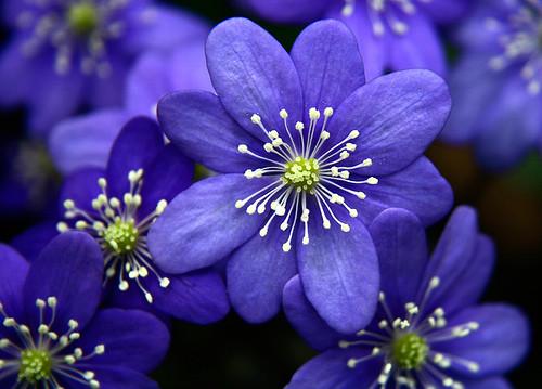 ~Floriiii~ Flowers_56