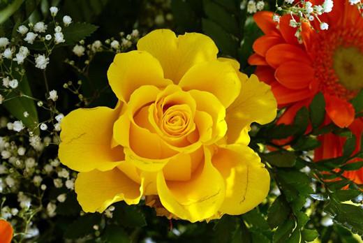 ~Floriiii~ - Page 2 Flowers_58