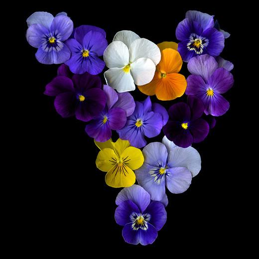 ~Floriiii~ - Page 2 Flowers_59