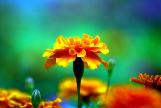 ~Floriiii~ - Page 2 Flowers_63
