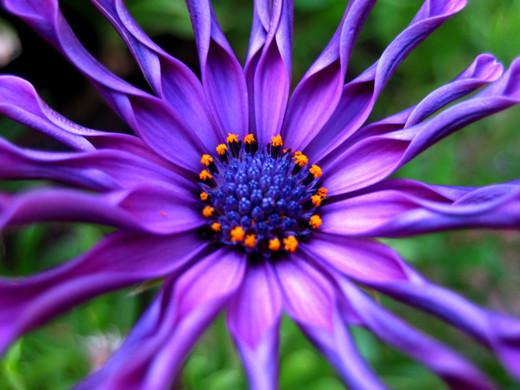~Floriiii~ - Page 2 Flowers_69