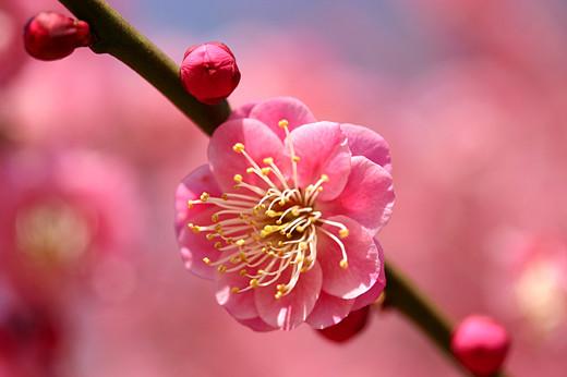 ~Floriiii~ Flowers_72