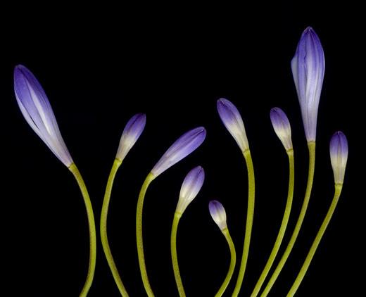 ~Floriiii~ - Page 2 Flowers_73