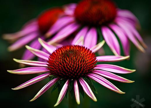 ~Floriiii~ Flowers_9