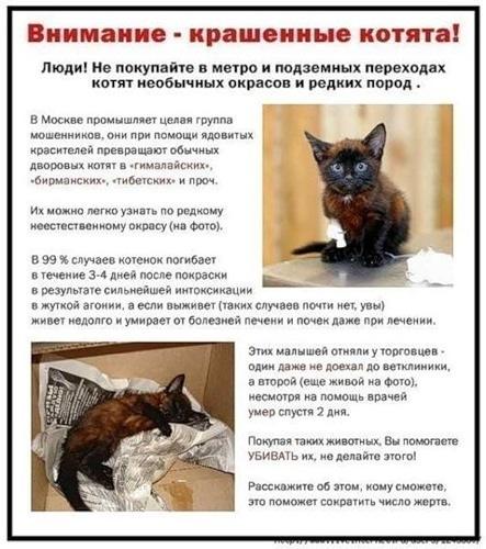 """Не покупайте котят на """"птичьем"""" рынке!  674587458"""