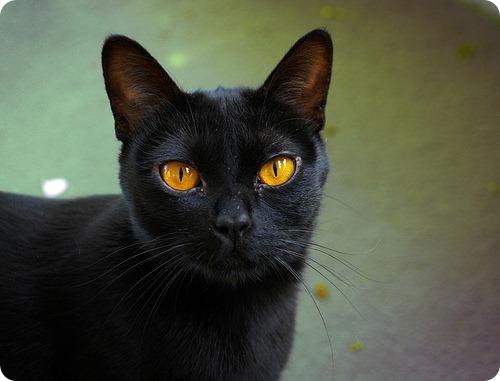 Необычные и редкие породы кошек и собак 2845284979_595dd05be1