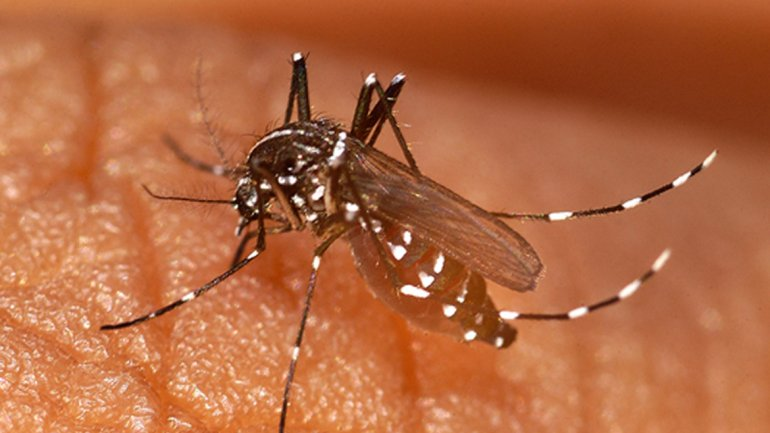 ¿Qué hay que saber sobre el virus sin cura chikungunya que se propaga por América? 0011160191