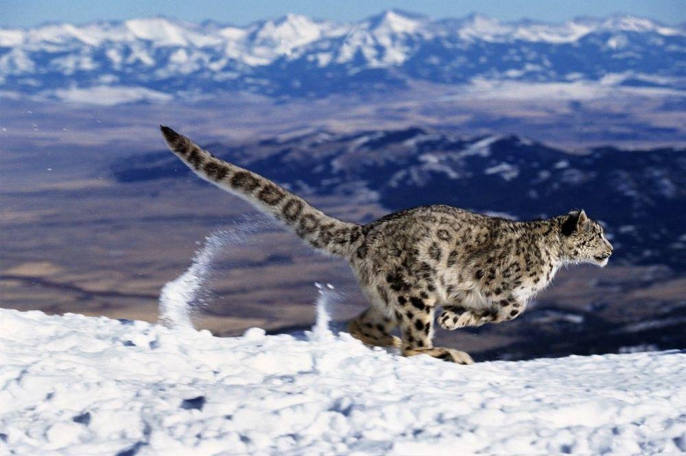 Ces animaux rares que nous pourrions ne plus jamais voir un jour… 1014995020
