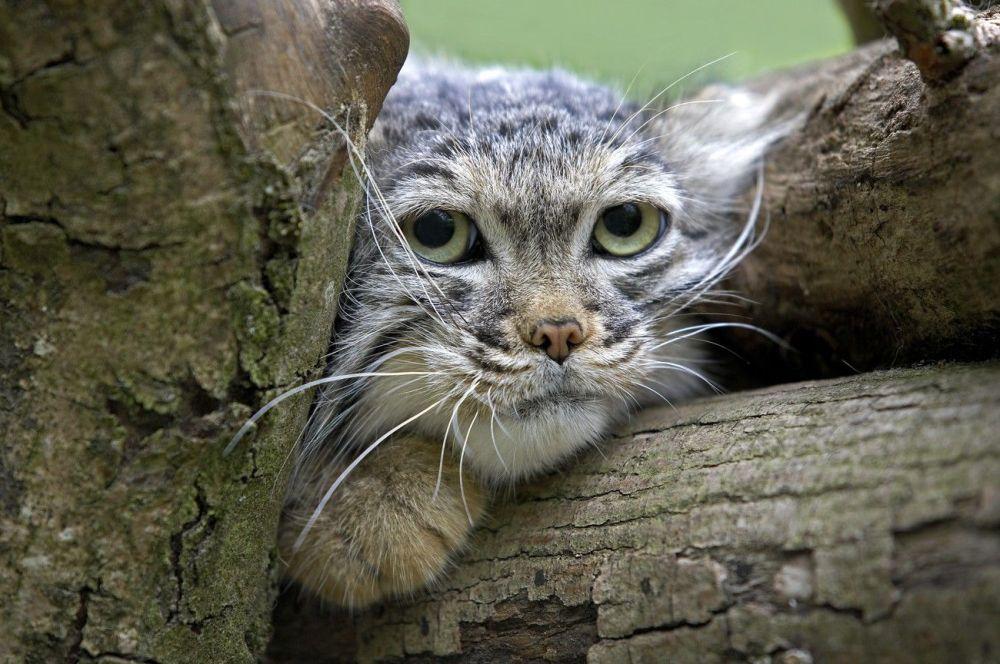 Ces animaux rares que nous pourrions ne plus jamais voir un jour… 1014995210