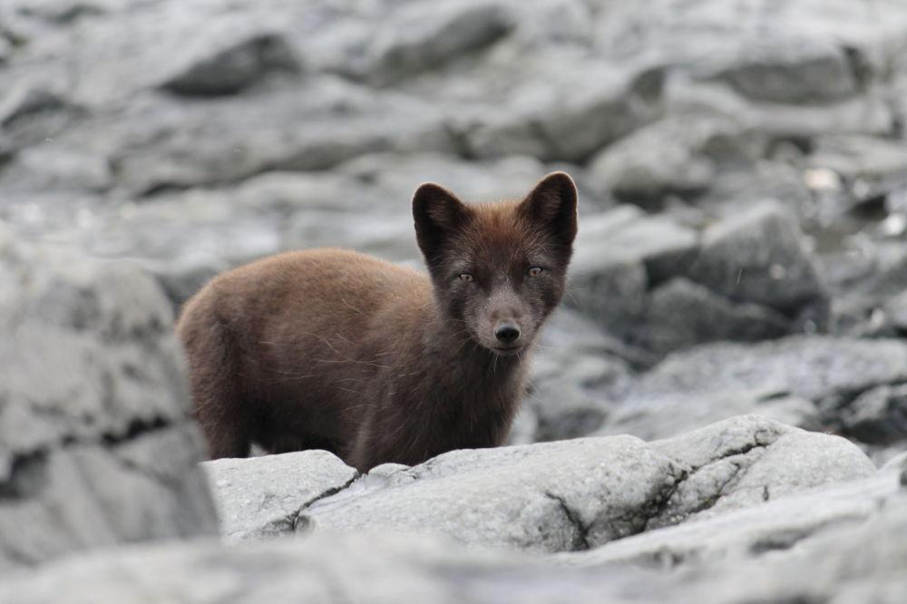 Ces animaux rares que nous pourrions ne plus jamais voir un jour… 1014995318