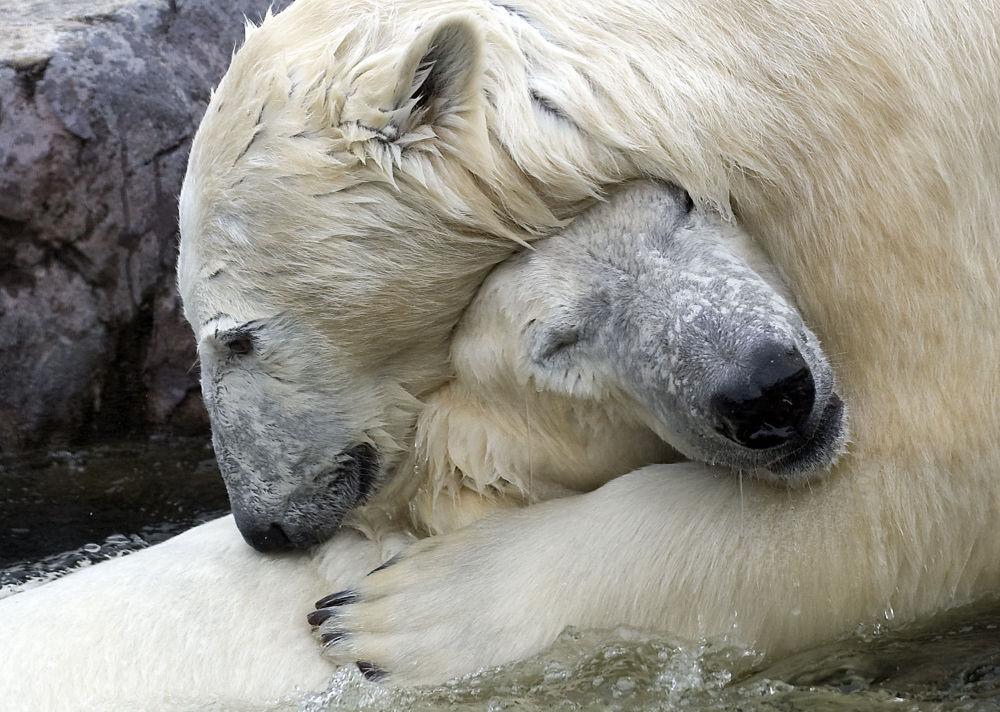 Ces animaux rares que nous pourrions ne plus jamais voir un jour… 1014995372
