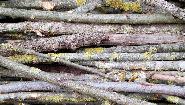 В РФ вводят уголовную ответственность за сбор дров в лесу 912479547