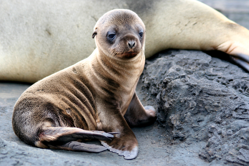 Animal Success Stories Prove Why We Need To Protect The Endangered Species Act Sea-lion