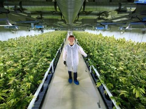 ¿Hay que legalizar la marihuana? - Página 19 1846319