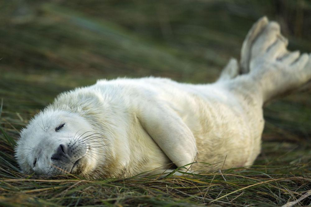 Ces animaux rares que nous pourrions ne plus jamais voir un jour… 1014995047