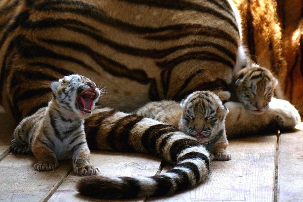 Ces animaux rares que nous pourrions ne plus jamais voir un jour… 1014995129