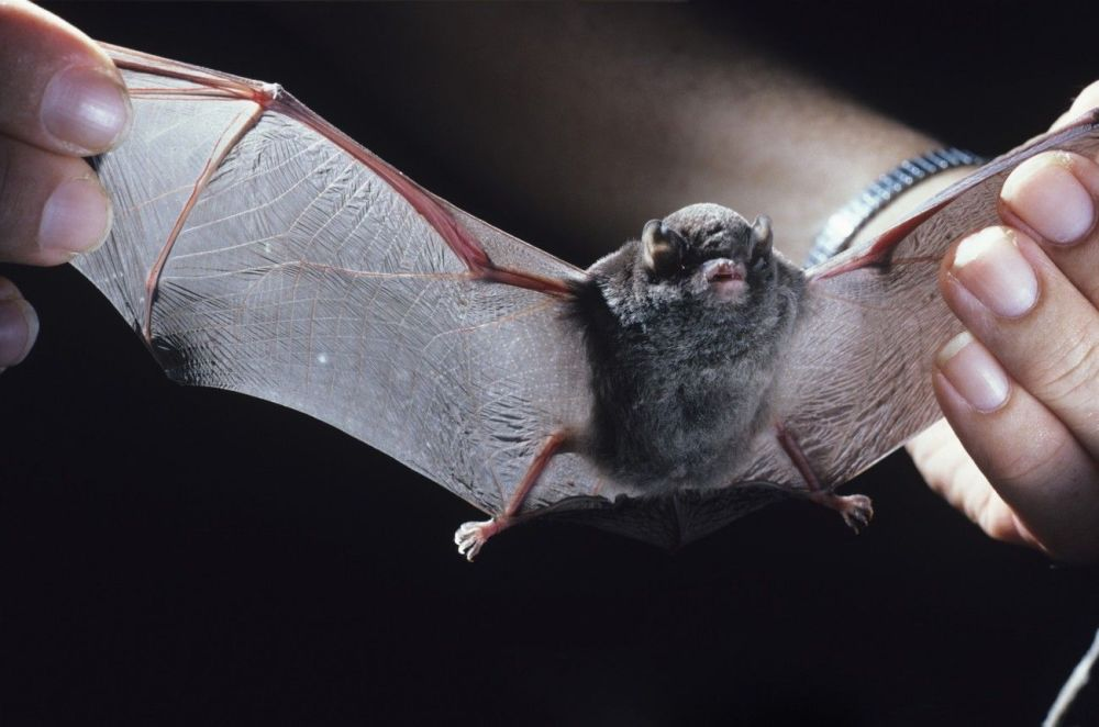 Ces animaux rares que nous pourrions ne plus jamais voir un jour… 1014995155