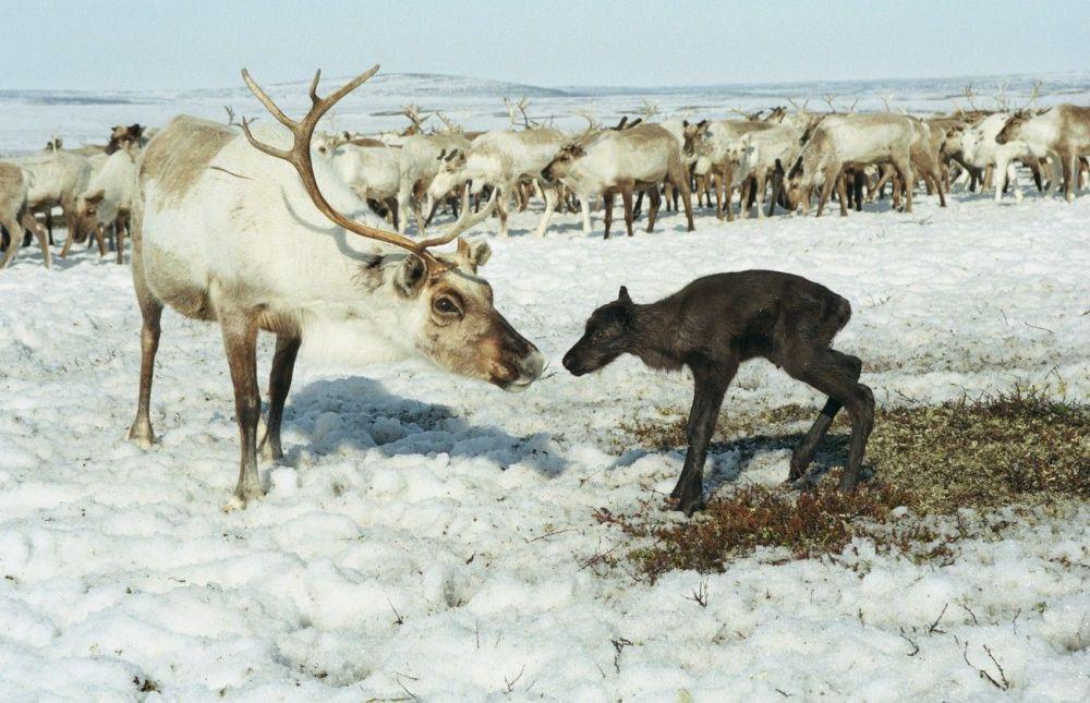 Ces animaux rares que nous pourrions ne plus jamais voir un jour… 1014995183
