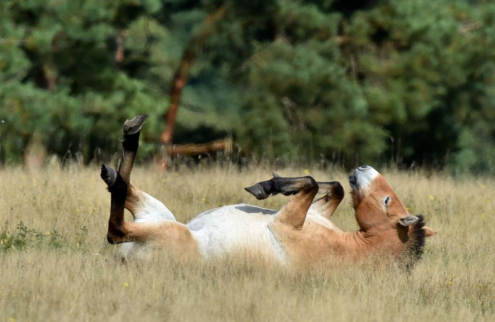Ces animaux rares que nous pourrions ne plus jamais voir un jour… 1014995399