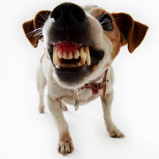 Топ самых опасных собак мира