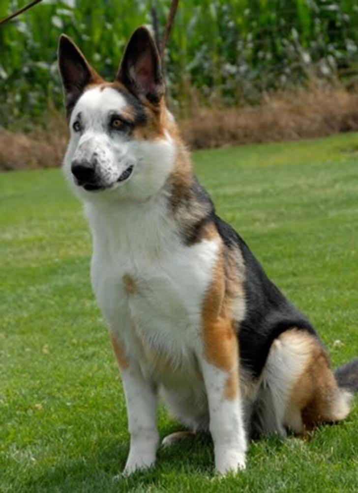 35 perros con el pelaje más espectacular y único que te puedas imaginar Dog-coat-41