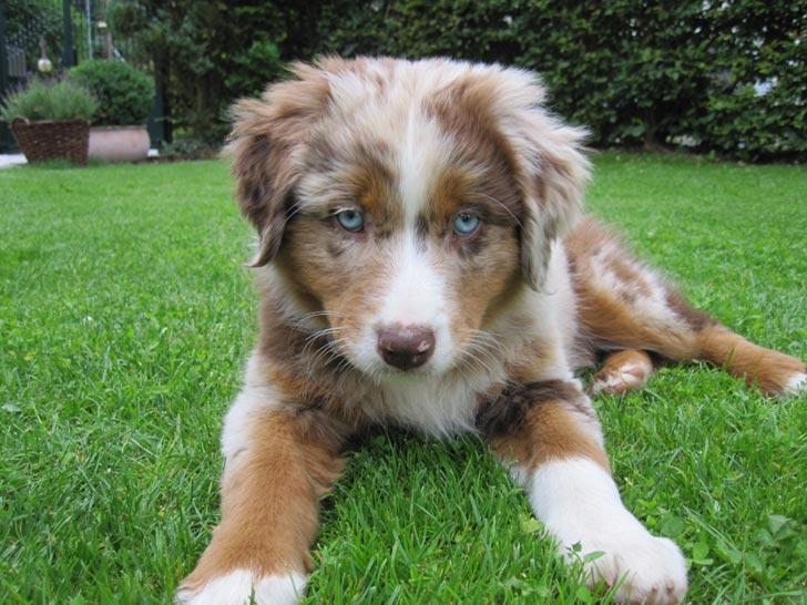 35 perros con el pelaje más espectacular y único que te puedas imaginar Dog-coat-42
