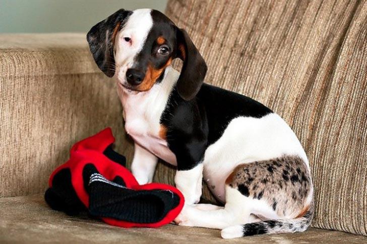 35 perros con el pelaje más espectacular y único que te puedas imaginar Dog-coat-markings-28
