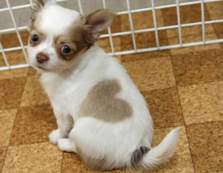 35 perros con el pelaje más espectacular y único que te puedas imaginar Dog-coat-markings-35