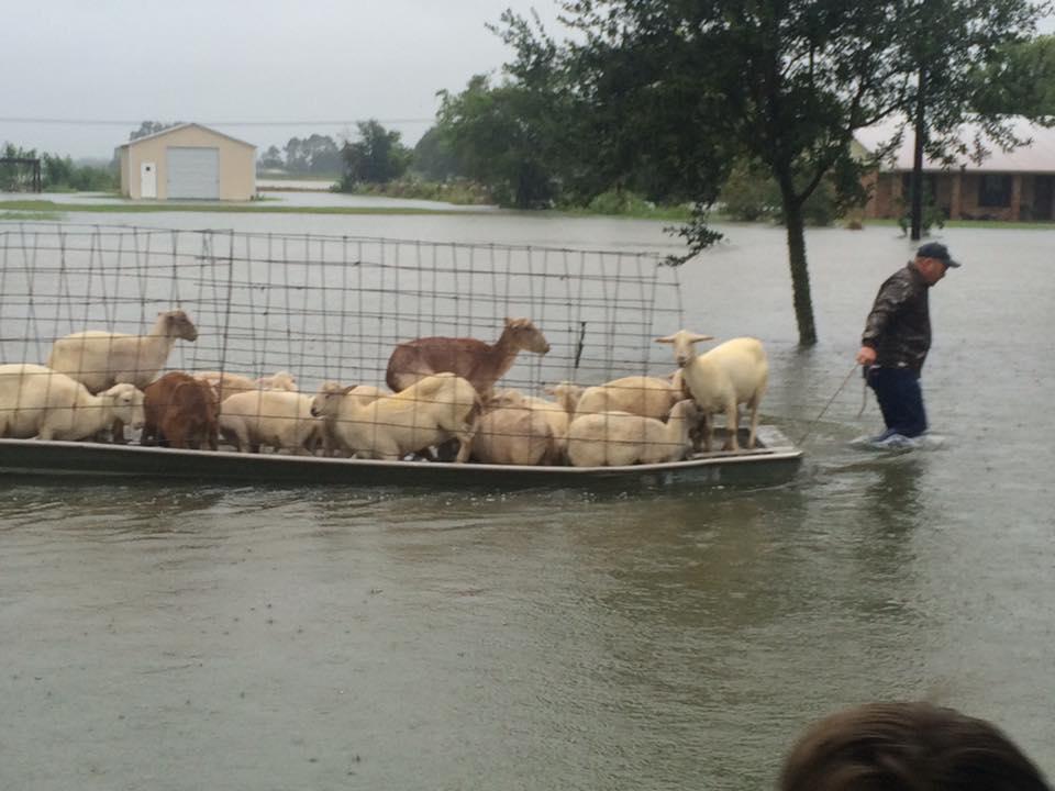 Louisiana Flood Update 13939324_10209492641369258_3579764201302166595_n