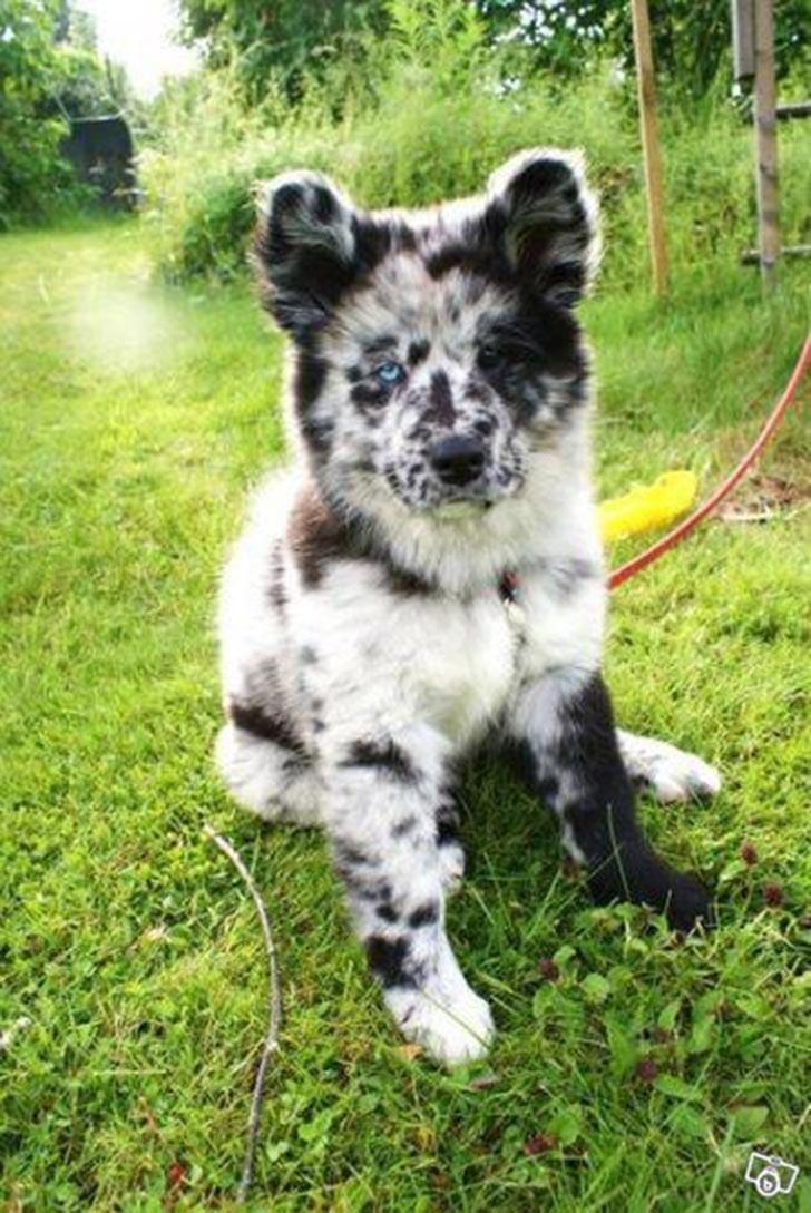 35 perros con el pelaje más espectacular y único que te puedas imaginar Dog-coat-44