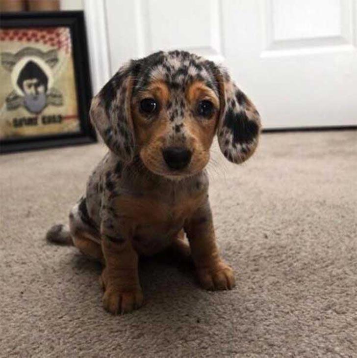 35 perros con el pelaje más espectacular y único que te puedas imaginar Dog-coat-markings-10