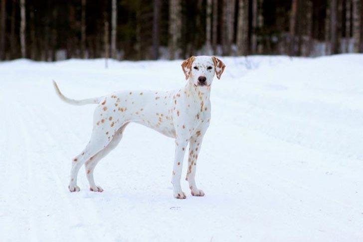35 perros con el pelaje más espectacular y único que te puedas imaginar Dog-coat-markings-33